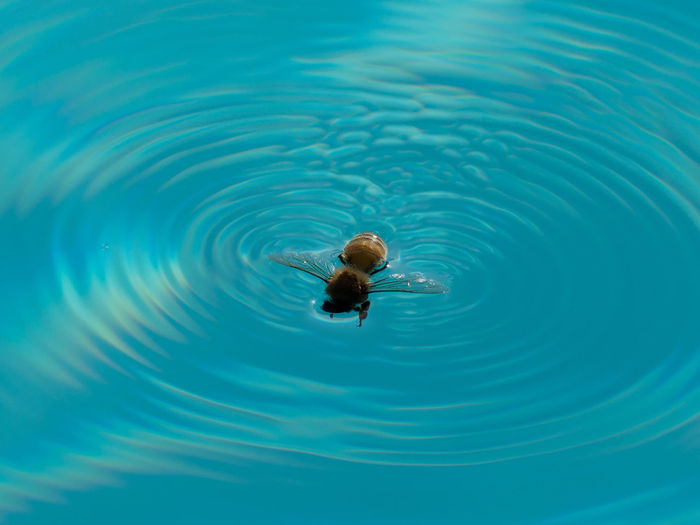 High angle view of bee swimming in pool