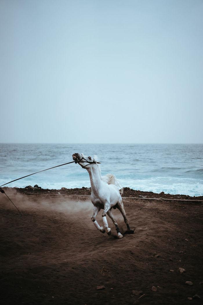 Horse walking at beach against clear sky