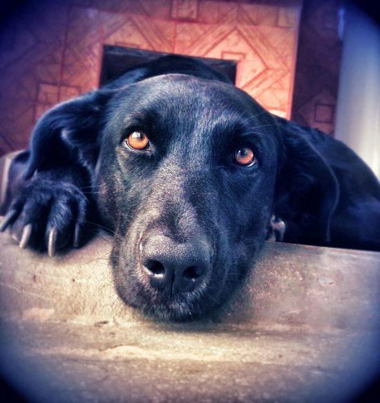Dog Love I Love My Dog Dogs On EyeEm Hanna Black Eyes Beautiful Linda 💜 Cute Pets Cute