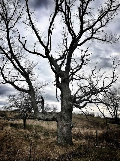 Gnarled Tree Tree Bare Tree Landscape Outdoors Nature No People Tranquility Beauty In Nature Tree Trunk