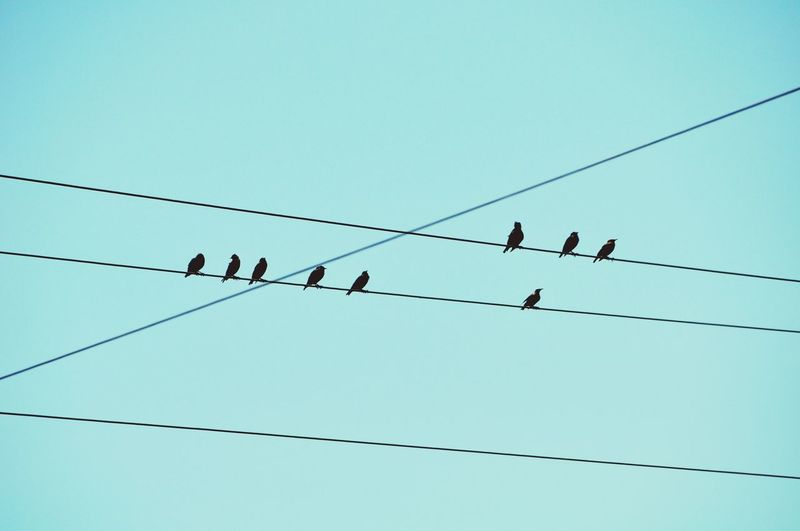 Low angle view of birds on cable against clear sky