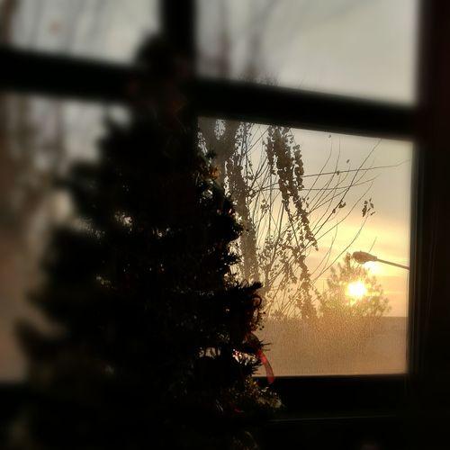 Christma's sun Window Sunset Tree Silhouette No People Close-up Growth