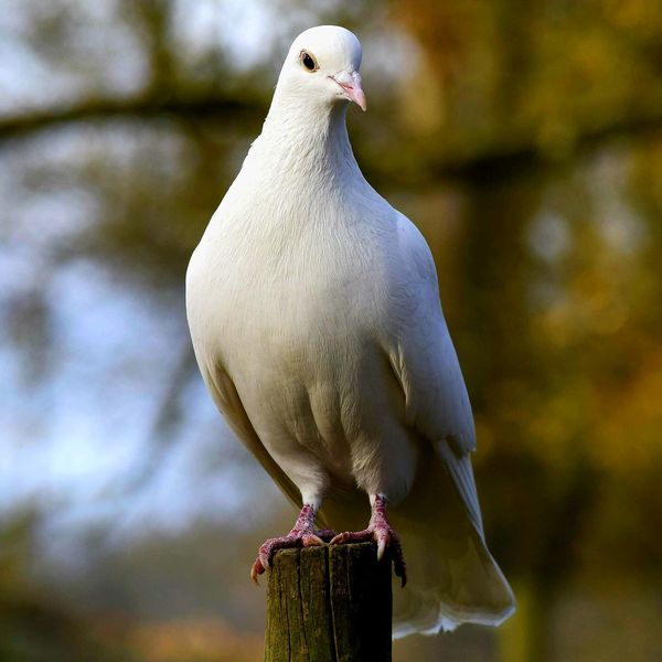 EyeEm Selects Bird Animal Wildlife Nature No People Animals In The Wild Outdoors Perching Water Beauty In Nature Full Length Animal Themes Close-up Mammal Mourning Dove Day Djaerialcreations