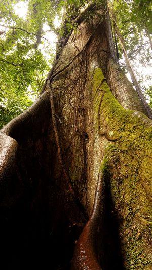 Big Tree JungleExperience Nature Enjoy Life