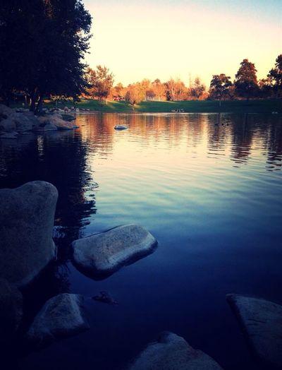 Eau Lac Nature Arbres Sapin