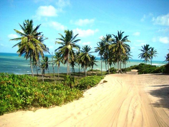 Beach Photography Beach Life Beach Natal - RN - Brasil Brazil