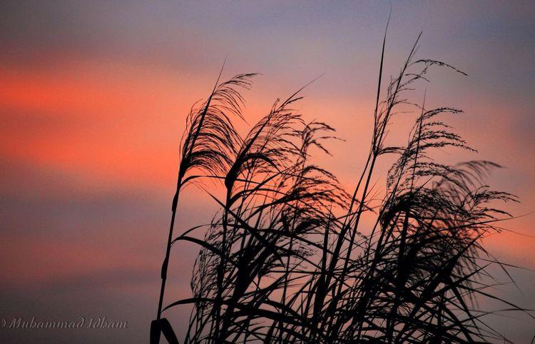 EyeEm Indonesia EyeEm Best Shots - Sunsets + Sunrise Sunset_collection Nature_collection