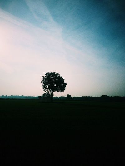 747 Tree Landscape Field Beauty In Nature Tranquil Scene Nature Lone Tranquility Silhouette Scenics Outdoors Sky No People Day Streetphotography EyeEmNewHere Thegreatoutdoors-2017EyEmawards