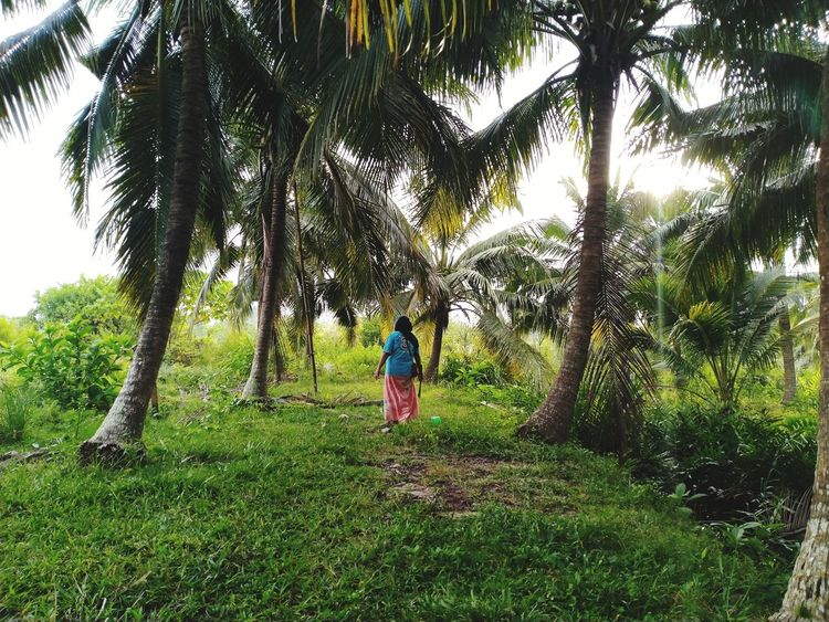 Coconut Coconut Ice Cream Coconut Palms Coconut Coconut Palm Tree Coconut Trees Coconut Tree Coconut Tree Tree Full Length Child Childhood Girls Standing Sky Grass Green Color Casual Clothing Cultivated Land Crop  Cereal Plant