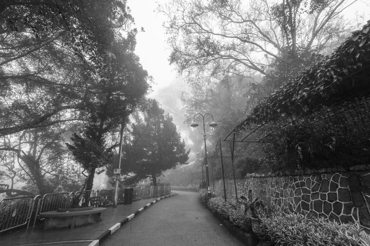 Foggy misty road indicating haunted in Penang Hill Tree Plant Direction The Way Forward Nature No People Growth Day Outdoors Footpath Penang Penang Malaysia Penang Island Transportation Road Street Diminishing Perspective Architecture Tranquility City Barrier Built Structure Treelined
