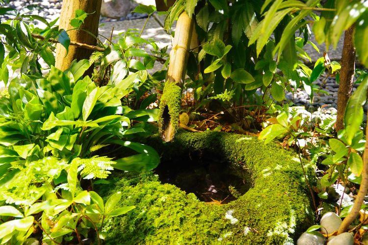 ししおどし Green Beauty In Nature Wabi-sabi NoEditNoFilter Japanese Traditional PENTAX K-70