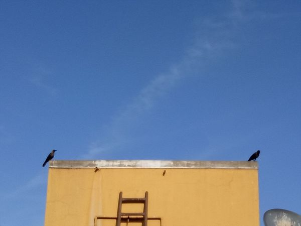 Taking Photos Bird Alandur Chennai