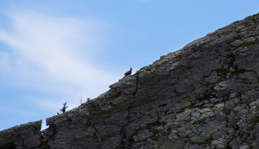 Low angle view of lizard on rock against sky