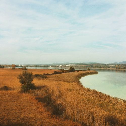 My sister showed me her new home. Autumn Colors Autumn Bodensee Enjoying Life EyeEm Nature Lover Fall Beauty Reeds