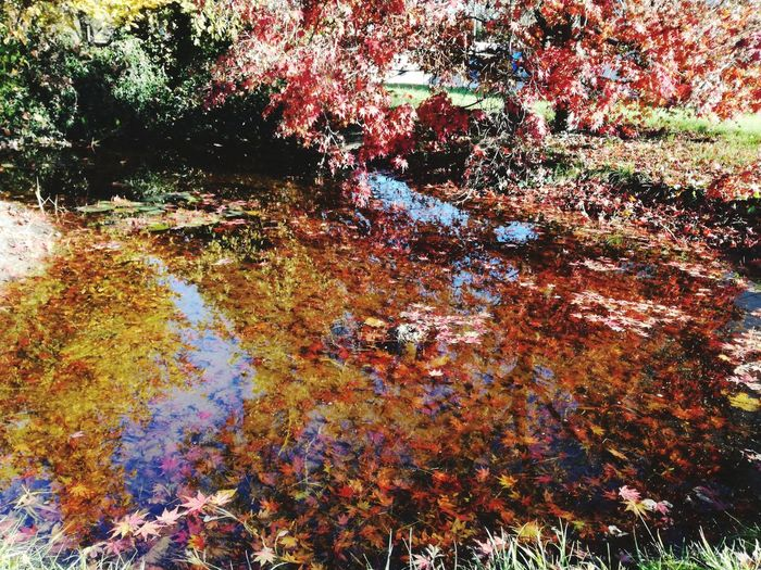 Multi Colored Backgrounds Outdoors Nature Photooftheday Redorangeyellow Falls Greeninbackground Loveit Relections Waterreflection Leaf 🍂 Redleafs Red Color Full Frame