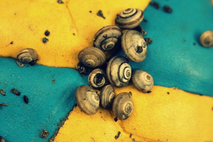 Snails on a Ball, Freydoonkenar, Mazandaran, Iran. First Eyeem Photo