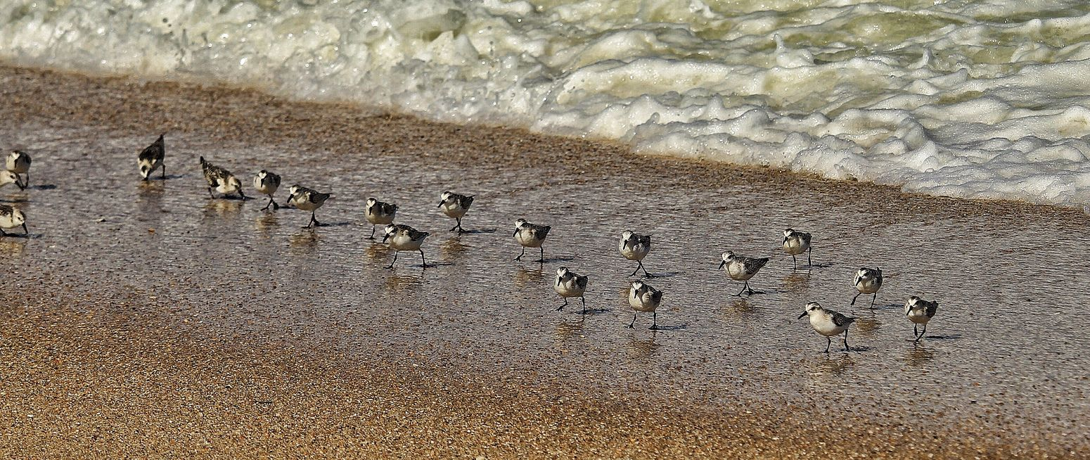 Beauty In Nature Sandpipers Reflection Sea Sand Life Sandy Hook NJ