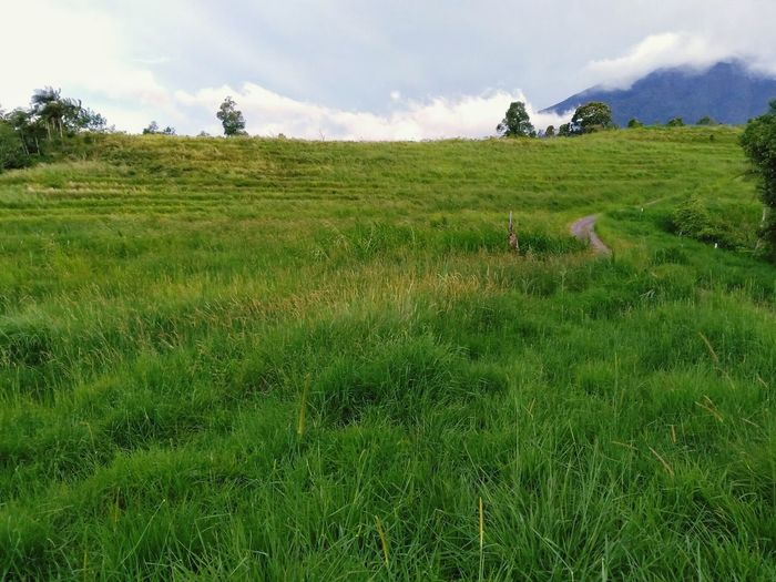 Field Green Color Grass Cloud - Sky Nature Rural Scene Landscape Tree Hill Sky Agriculture Outdoors Summer Day No People Growth Freshness Beauty In Nature Scenics Tea Crop Green Color Mountain Range Mountain Beauty In Nature EyeEmNewHere