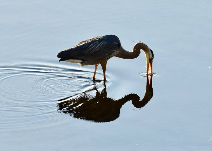 Bird in shallow water