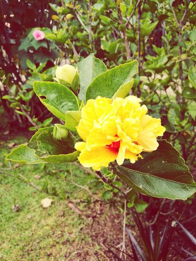 Flower Nature Growth Freshness Petal Beauty In Nature Fragility Leaf Plant Green Color Flower Head Yellow Outdoors Day No People Close-up Blooming