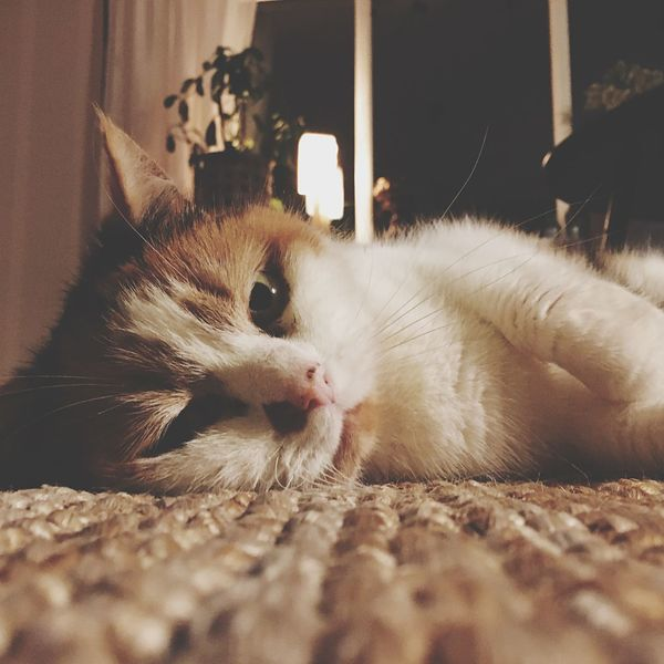 Cosy Low Angle Cat Eye EyeEmNewHere Beige Tabby Cat Restful Peaceful Carpet Cat At Home EyeEm Selects Cat Feline Domestic Cat Mammal Pets Domestic One Animal No People Lying Down Looking At Camera Close-up Relaxation Domestic Animals Indoors  Animal