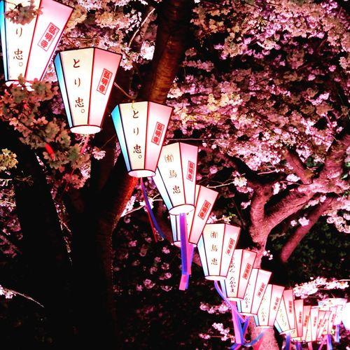 Yozakura 夜桜 Lantern 提灯