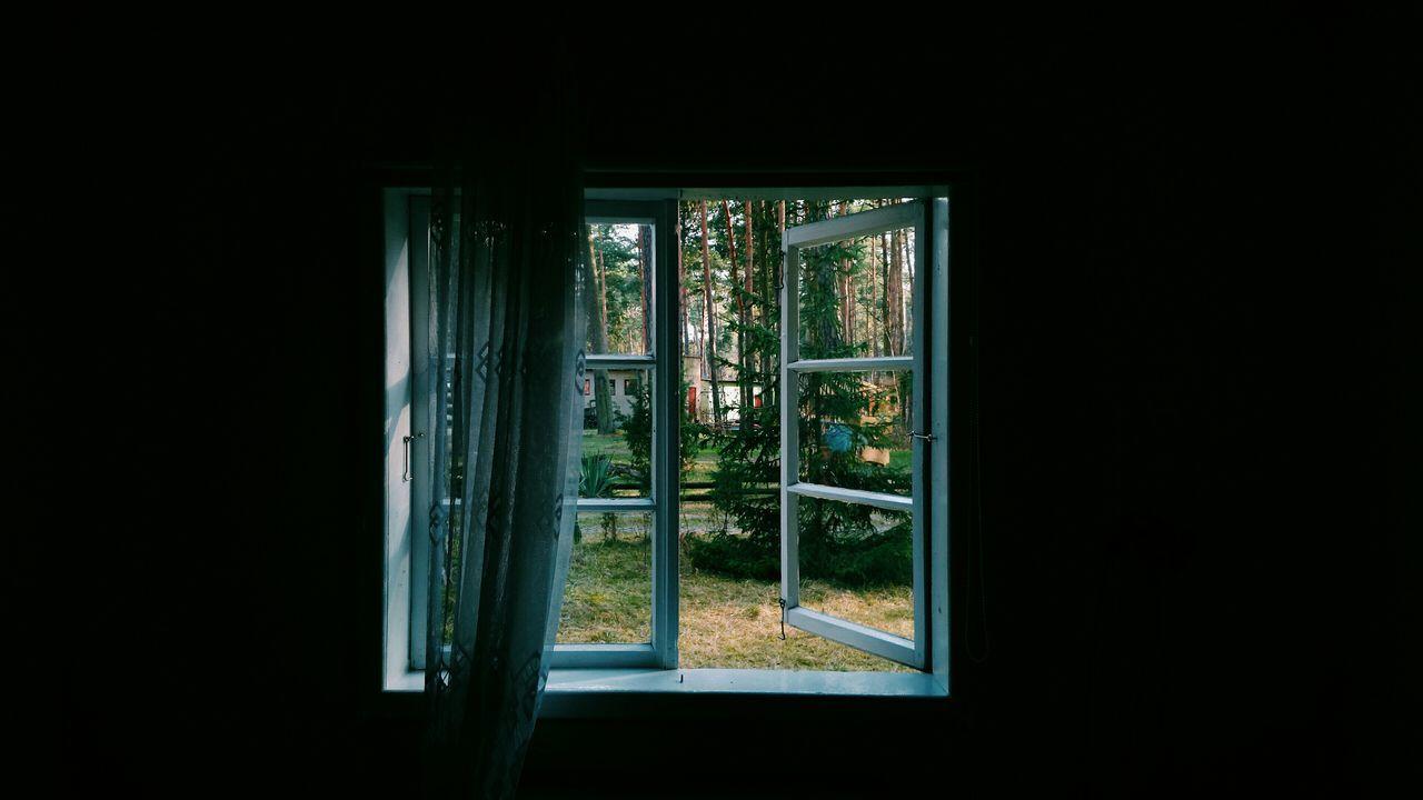 Trees in yard seen through window