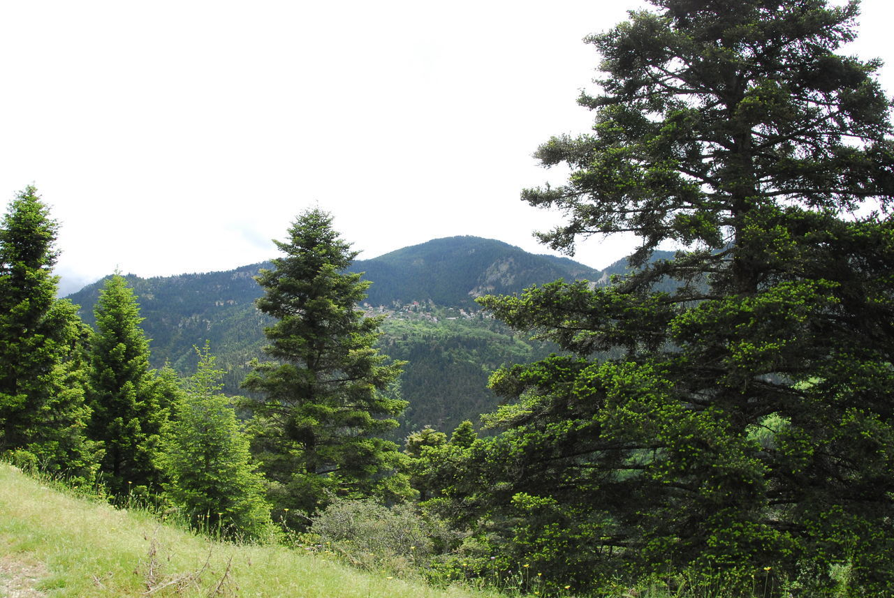 SCENIC VIEW OF PINE TREES AND MOUNTAINS AGAINST CLEAR SKY