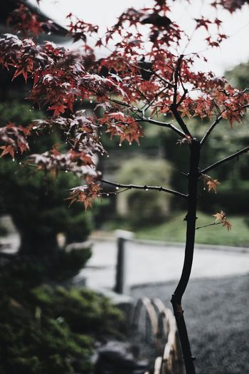 VSCO Nature Japan Vscocam Snap Light And Shadow Streetphotography Plant Tree Focus On Foreground Branch Growth Nature Day