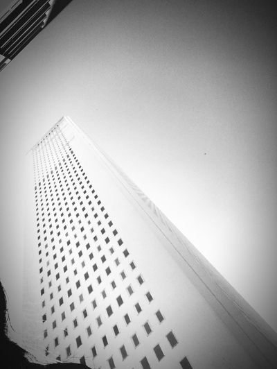 Low Angle View Built Structure Architecture Building Exterior Building Sky Tall - High City Office Building Exterior Clear Sky No People Modern Day Copy Space Office Vignette Nature Skyscraper Tower Window Autumn Mood EyeEmNewHere
