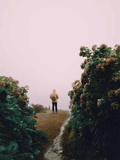 Foggy morning Self Portrait Travel Destinations Travel Azores EyeEm Best Shots Plant Tree Sky Real People Clear Sky Nature Growth Copy Space Lifestyles One Person Leisure Activity Men Beauty In Nature Walking Standing Outdoors