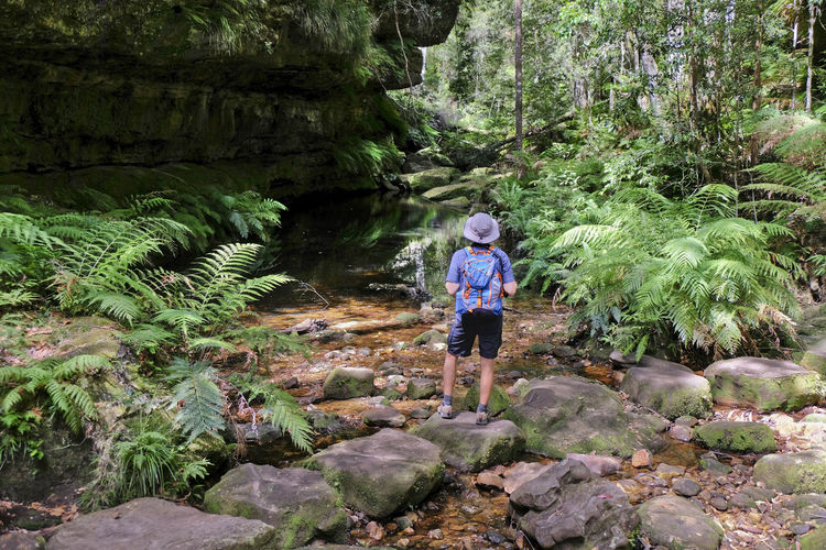 Rear View Of Man Standing On Rock In Forest