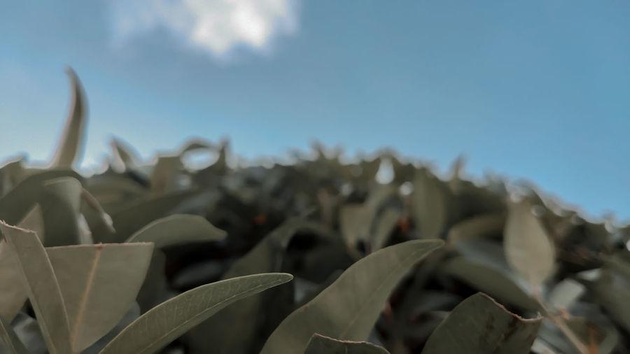 Close-up of succulent plants against sky