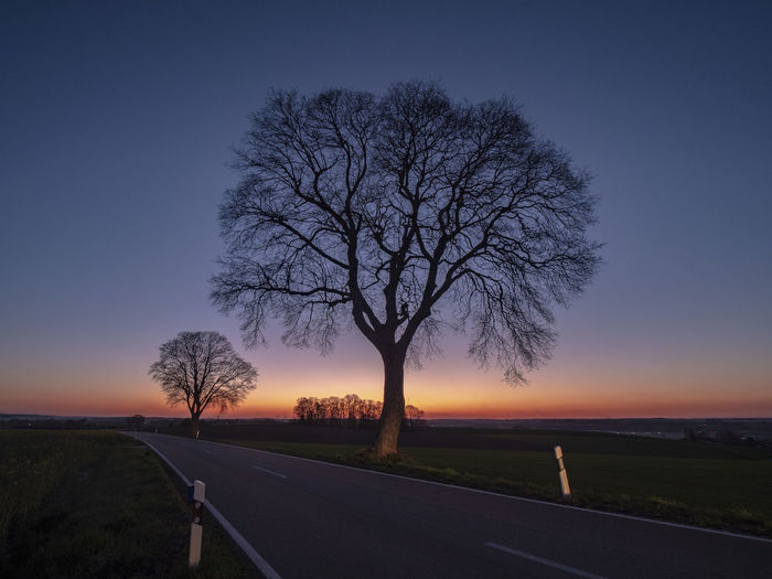 Bare tree by road against sky during sunset