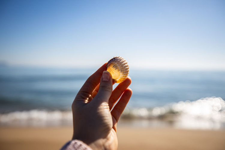 Close-up of hand holding seashell on beach