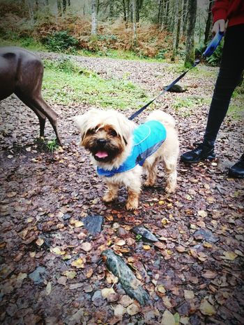 Dog Pets Loyalty Pampered Pets Outdoors WoodLand Green Color Beauty In Nature Non-urban Scene Aberfoyle Beautiful Scotland <3 Freddie The Dog