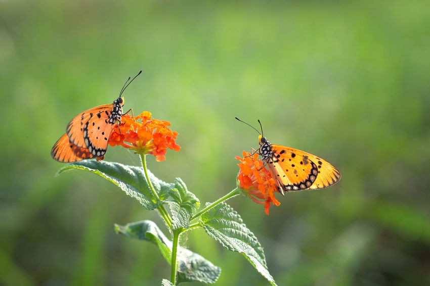 Butterfly Dragonfly Macro Art Macro Photography Macro_collection Nature Outdoors Wildlife