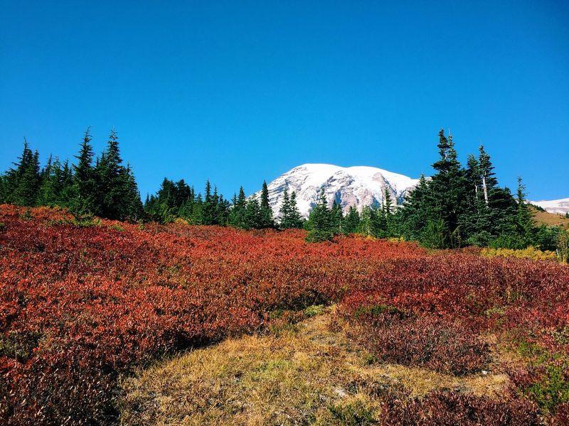 Autumn Mount Rainier National Park Fall Beauty