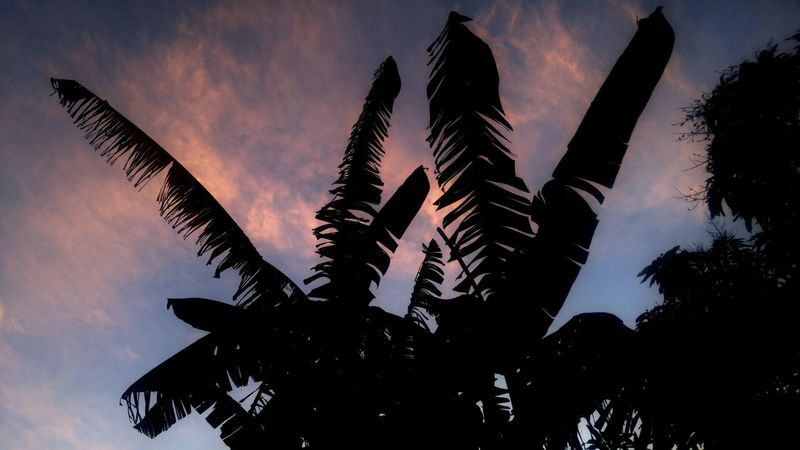 Bananas Leaf Nature Sky Beauty In Nature Morning Light Morning Morning Sky Check This Out Outdoors
