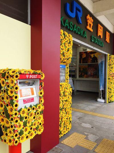 KASAOKA Flowers