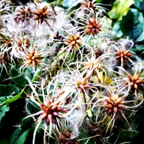 Flower Nature Plant Growth No People Seed Focus On Foreground Close-up Fragility Flower Head Beauty In Nature Outdoors Day Freshness