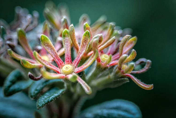 Flower & Buds Beauty In Nature Blooming Blossom Botany Bud Close-up Day Flower Flower Head Focus On Foreground Fragility Freshness Growth Gunbir In Bloom Nature New Life No People Outdoors Petal Plant Pollen Selective Focus Stamen Stem