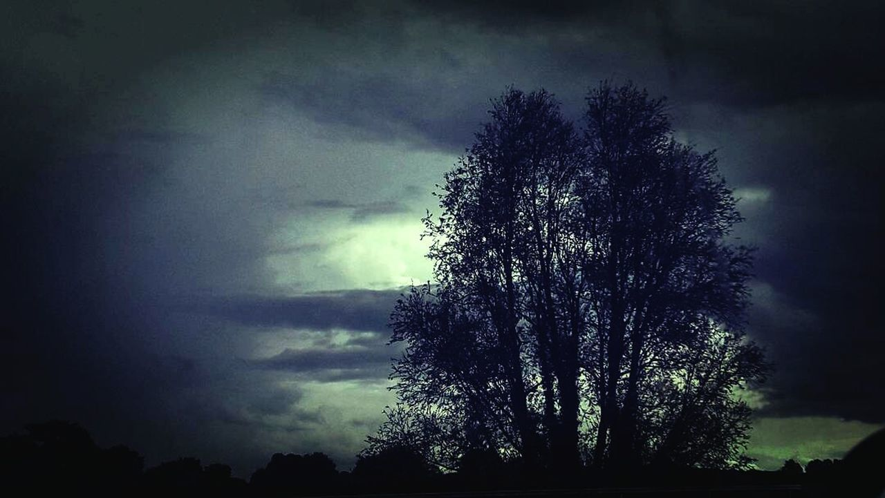 tree, nature, beauty in nature, sky, scenics, tranquility, silhouette, tranquil scene, cloud - sky, low angle view, no people, outdoors, storm cloud, forest, growth, night