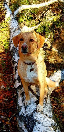 Samsung Samsung Galaxy S8 Photography Nature Photography Hund Dog Dogs Of EyeEm Hunde Liebe ♡ Hundefotografie Hunde Hundeleben Hunderunde Dogslife