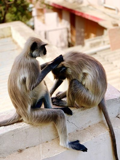 High angle view of langurs on building terrace