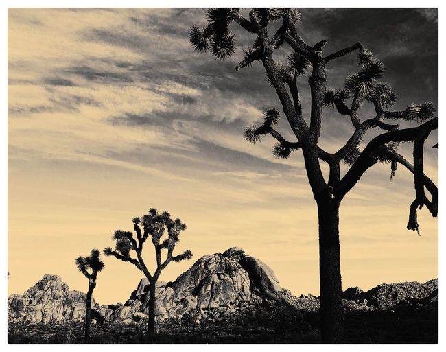 There is something about being in the middle of nowhere Landscape_Collection Joshua Tree California Camping