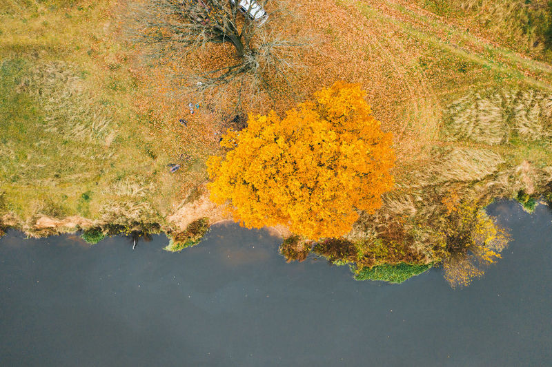Autumnal scenery at the river in belarus
