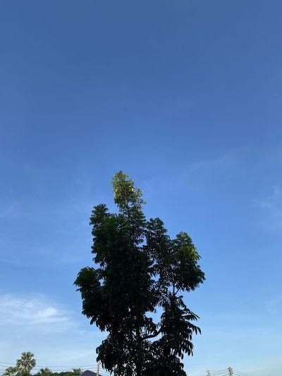 Nice tre Tree