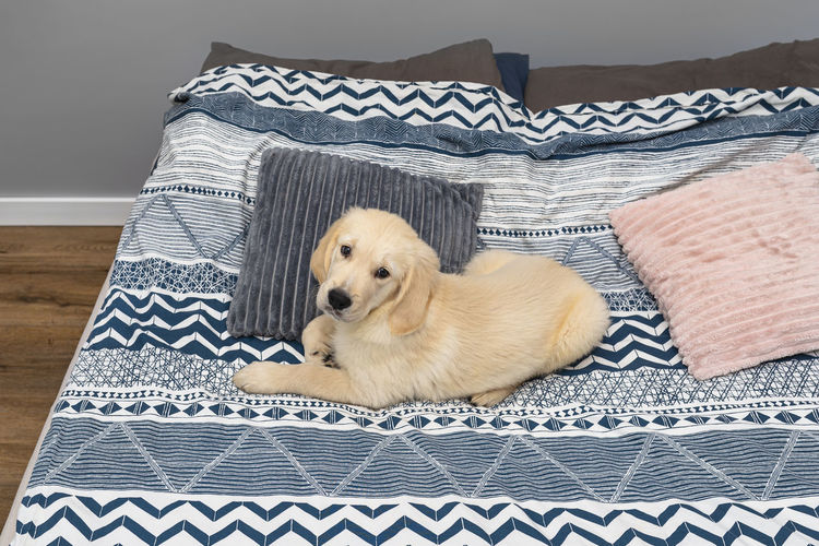 View of a dog resting on bed