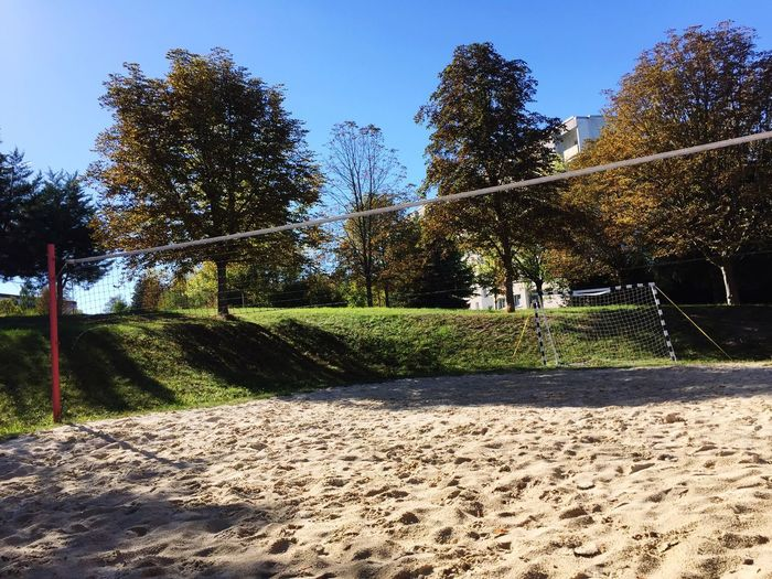 Sand and clear sky Plant Tree Sunlight Nature Sky No People Shadow Day Growth Tranquility Outdoors Beauty In Nature Clear Sky Park Sunny Sport Park - Man Made Space Land Tranquil Scene Green Color